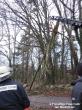 Baum in Telefonleitung