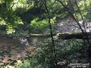 2016.06.14 Baum im Fluss Regen