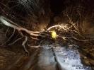 2019.02.03 Schneebruch Bahnstrecke Cham-->Bad Kötzting